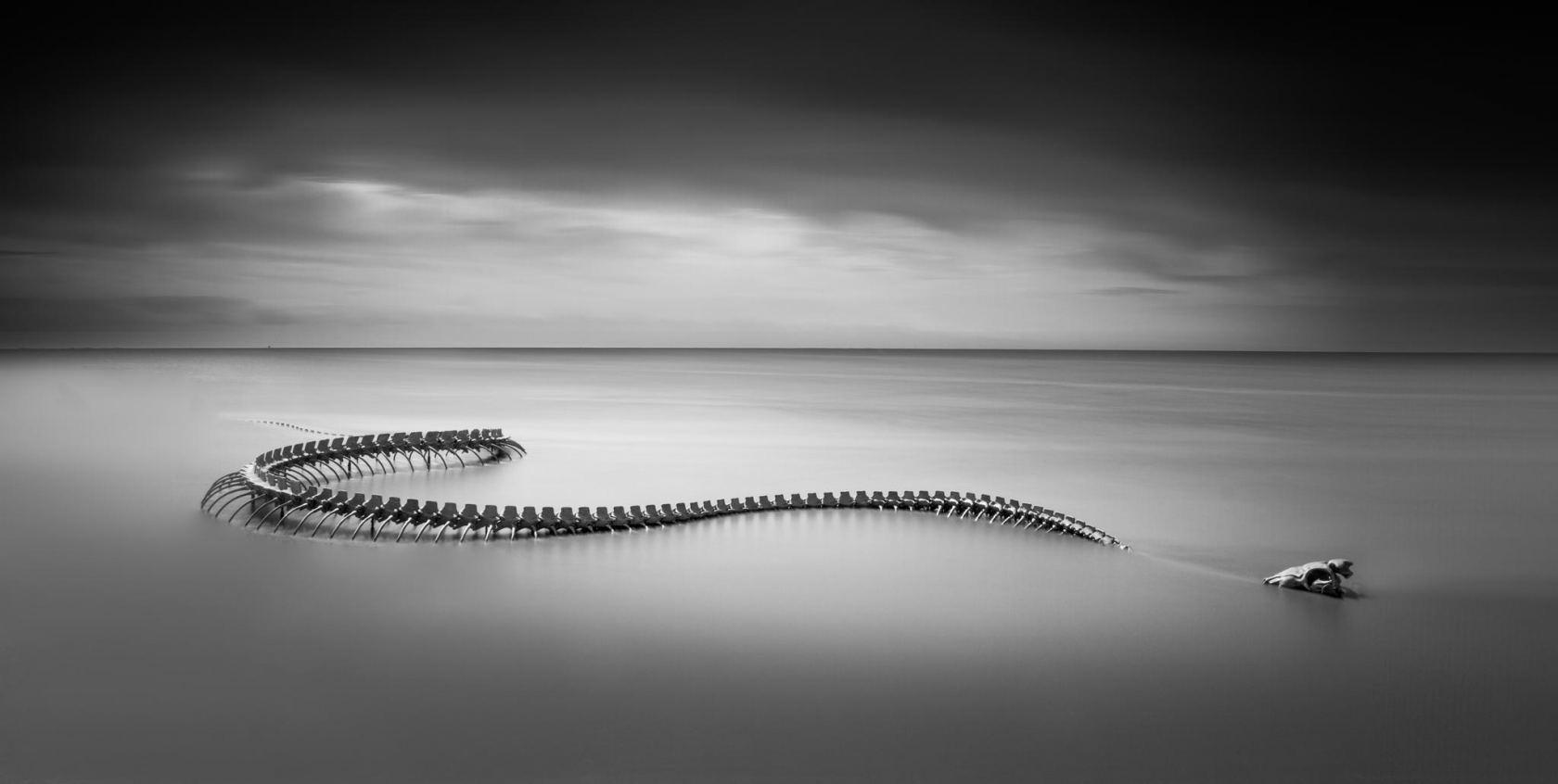 Squelette du serpent géant de l'estuaire de la Loire